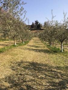 societa agricola alba alto sebino laghi lombardi olio di oliva italiano dop