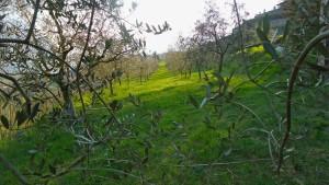 olio italiano made in italy agricola alba lovere homeslide