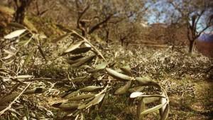 olio italiano made in italy agricola alba lovere homeslide 2